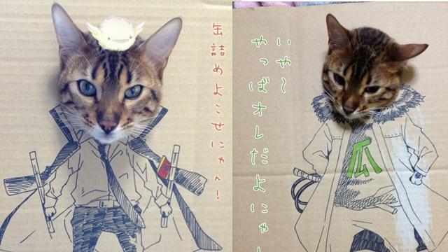 Ο γάτος την είδε cosplayer!