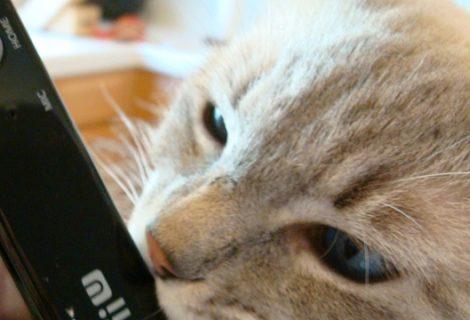 Το Wii U αρέσει στις γάτες!