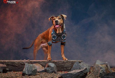 Σκυλίσιο... cosplay με την σφραγίδα της Microsoft και του Xbox!